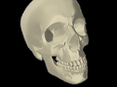 Bone 3D Models for Free - Download Free 3D · Clara io