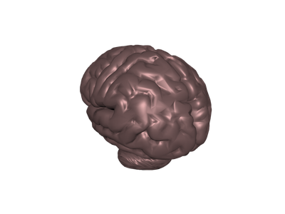 Brain 3D Models for Free - Download Free 3D · clara.io